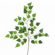 Umělá větvička břízy NIKOLAJ, zelená, 70cm