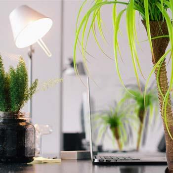Rostliny do kanceláře