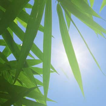Umělé rostliny odolné vůči UV záření